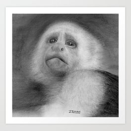 Capuchin monkey Art Print