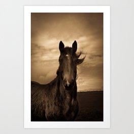 English horse in sepia tones Art Print