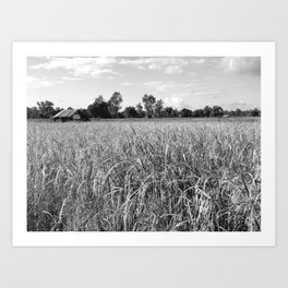 Field And Cottage Art Print