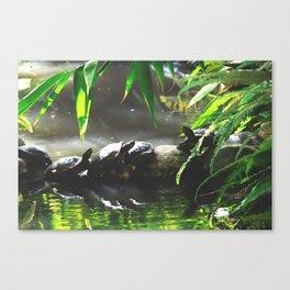 Turtle Life Canvas Print