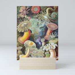 Ernst Haeckel Actiniae Mini Art Print