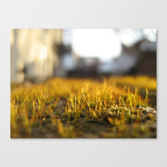 Brooklyn Moss Canvas Print