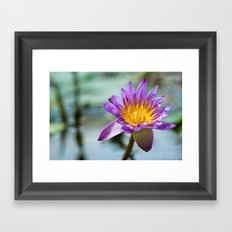 Blue Egyptian Water Lily 540 Framed Art Print