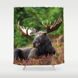 Relax Moose Shower Curtain