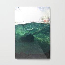 Swimming Otters Metal Print