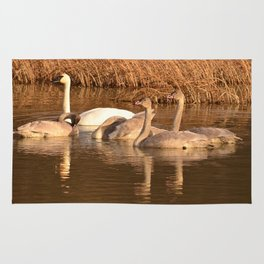 Trumpeter Swan Family Rug