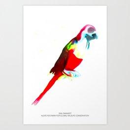 Sinu Parakeet Art Print