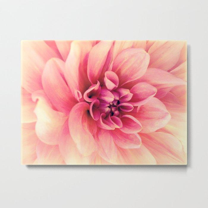 Her Smile (Spring Blooming Rose Pink Dahlia) Metal Print