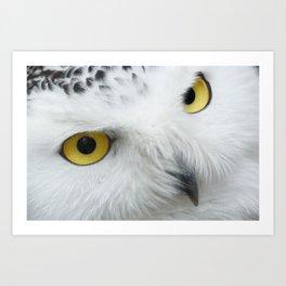 Snowy Owl Eyes Art Print