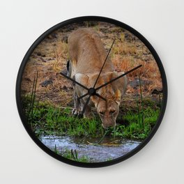 Lioness At The Waterhole Wall Clock
