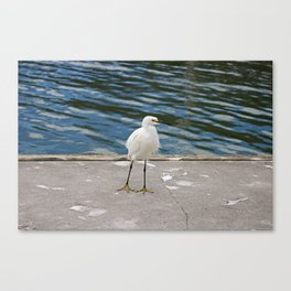 Weekend Willy Canvas Print