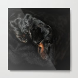 Nora Black Dachshund Metal Print