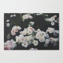 Cold Roses Canvas Print