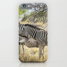 Zebras - Some Chilling, Some Not iPhone Case