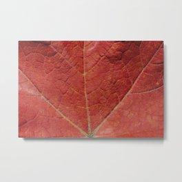 Macro Leaf Photography Print Metal Print