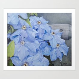 Blue Clematis Flowers on Knotted Fence Post Art Print