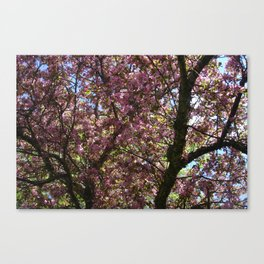 Spring Blossoms III Canvas Print