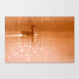 Early Morning Magic .:. Greylag Goose at sunrise Canvas Print