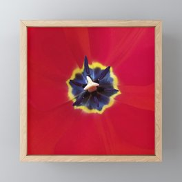 Seeing red (at tulip time) Framed Mini Art Print