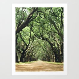 Canopy of Oaks Art Print