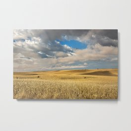 Iowa in November - Golden Corn Field in Autumn Metal Print