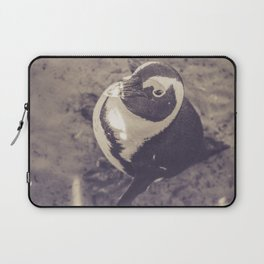 Adorable African Penguin Series 3 of 4 Laptop Sleeve