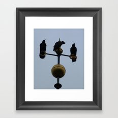 Scottish storm crows Framed Art Print