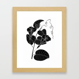 Bone Marrow Tobacco (Also known as Rock Pituri) - Nicotiana gossei Framed Art Print