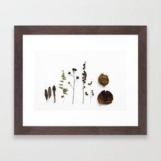 FLORA STUDY Framed Art Print