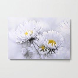 Flowers white macro 072 Metal Print