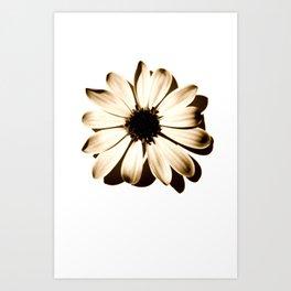 DAISY BROWN Art Print