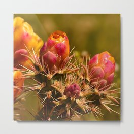 Cacti in Bloom - II Metal Print