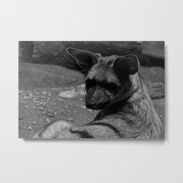 Ears Metal Print