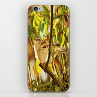sparrow iPhone & iPod Skins featuring Sparrow by Judy Palkimas