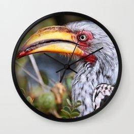 Yellow-billed hornbill, South Africa Wall Clock