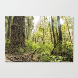 Schrader Old Growth Forest Canvas Print