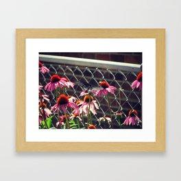 Last flower Framed Art Print