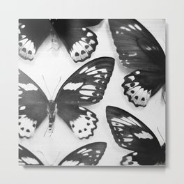 Black and White Butterflies Metal Print