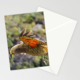 Kea New Zealand Native bird | Arthurs Pass (South Island) | Colorful Travel Photography Stationery Cards