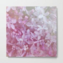 *Pinklight - Lilacs Metal Print