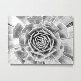 Succulent V Metal Print