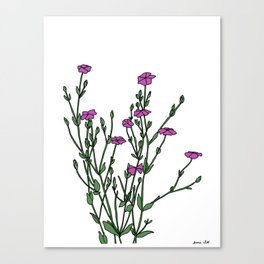 Connecticut Wildflowers Canvas Print