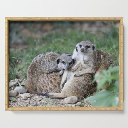 meerkats in the savannah Serving Tray