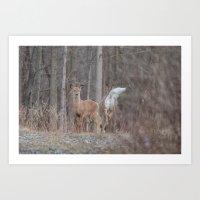 Deer in Woods Art Print