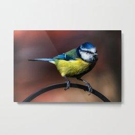 Blue Tit Metal Print