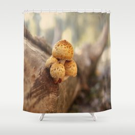 Mushrooms on tree trunk, autumn impression Shower Curtain