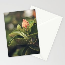 Capullo de Hibisco - Hibiscus bud Stationery Cards