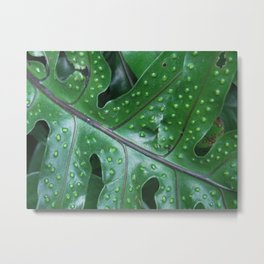 polka dot leaf Metal Print