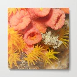 Yellow polyp anemone coral Metal Print