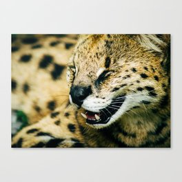 Smiling Serval Canvas Print